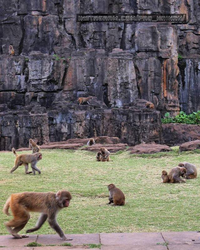 городок обезьян