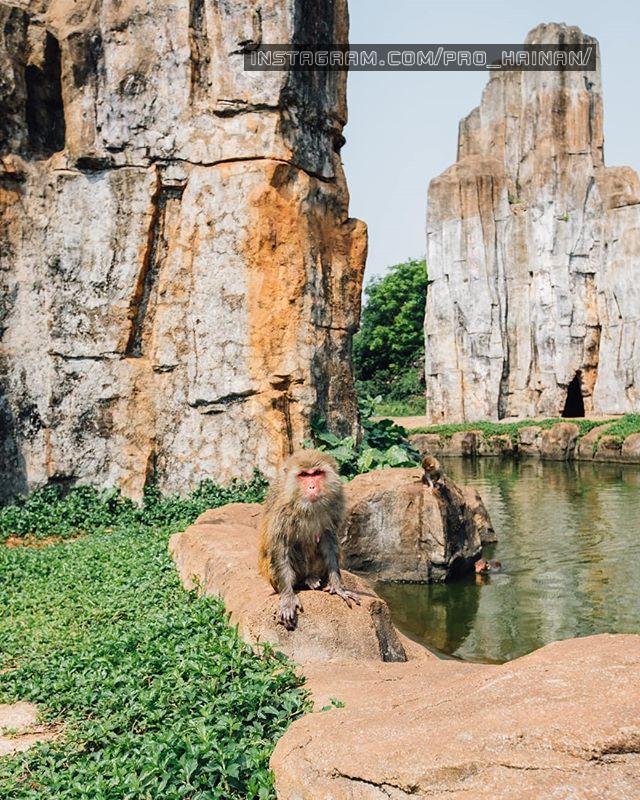 сафари парк хайкоу